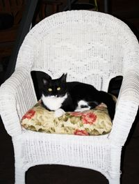 Fred in chair