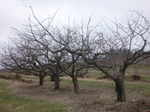 Cold_spring_orchard_037