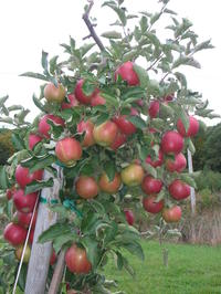 Cold_spring_orchard_1007_026