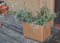 Box_of_catnip
